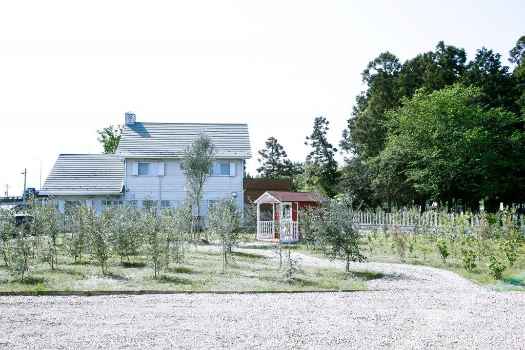 ティーハウス オリーブ畑
